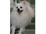 Annunci di cani Cavalier King in Sicilia